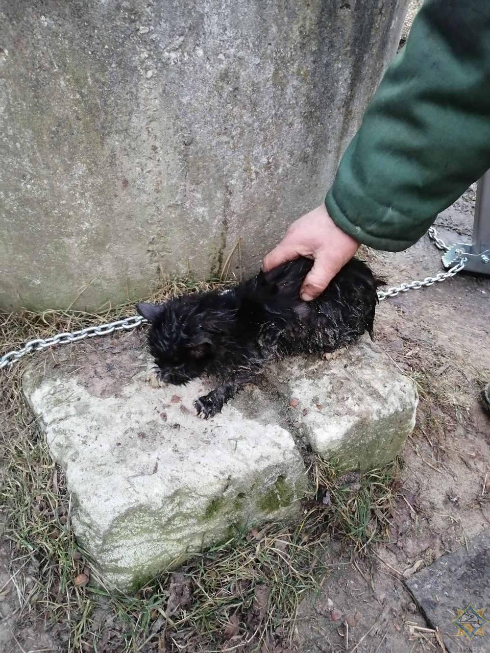 Дятловские спасатели помогли котенку, угодившему в глубокий колодец.