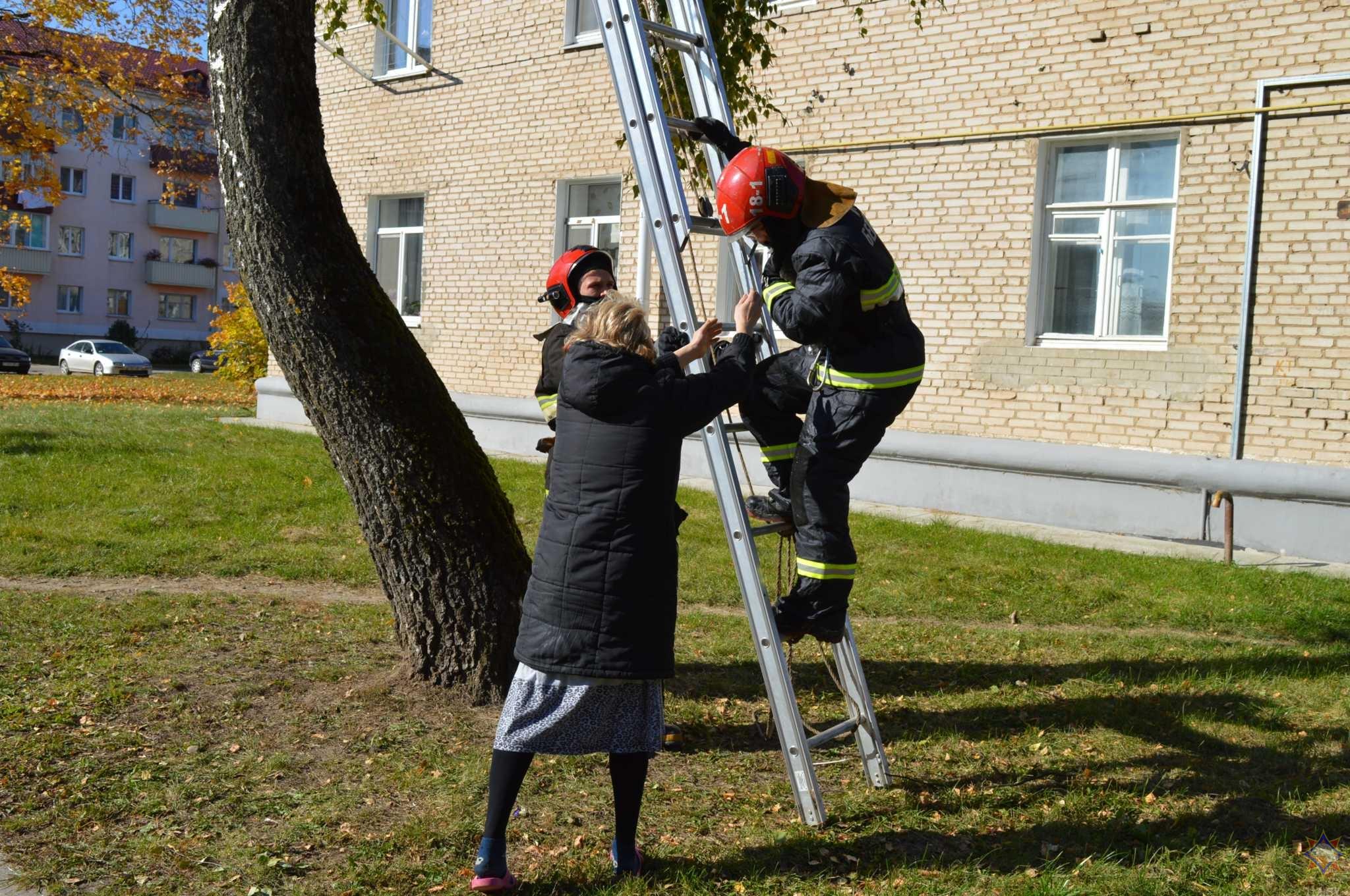 В Щучине спасатели сняли с дерева и передали хозяйке кошку, которая просидела там больше суток