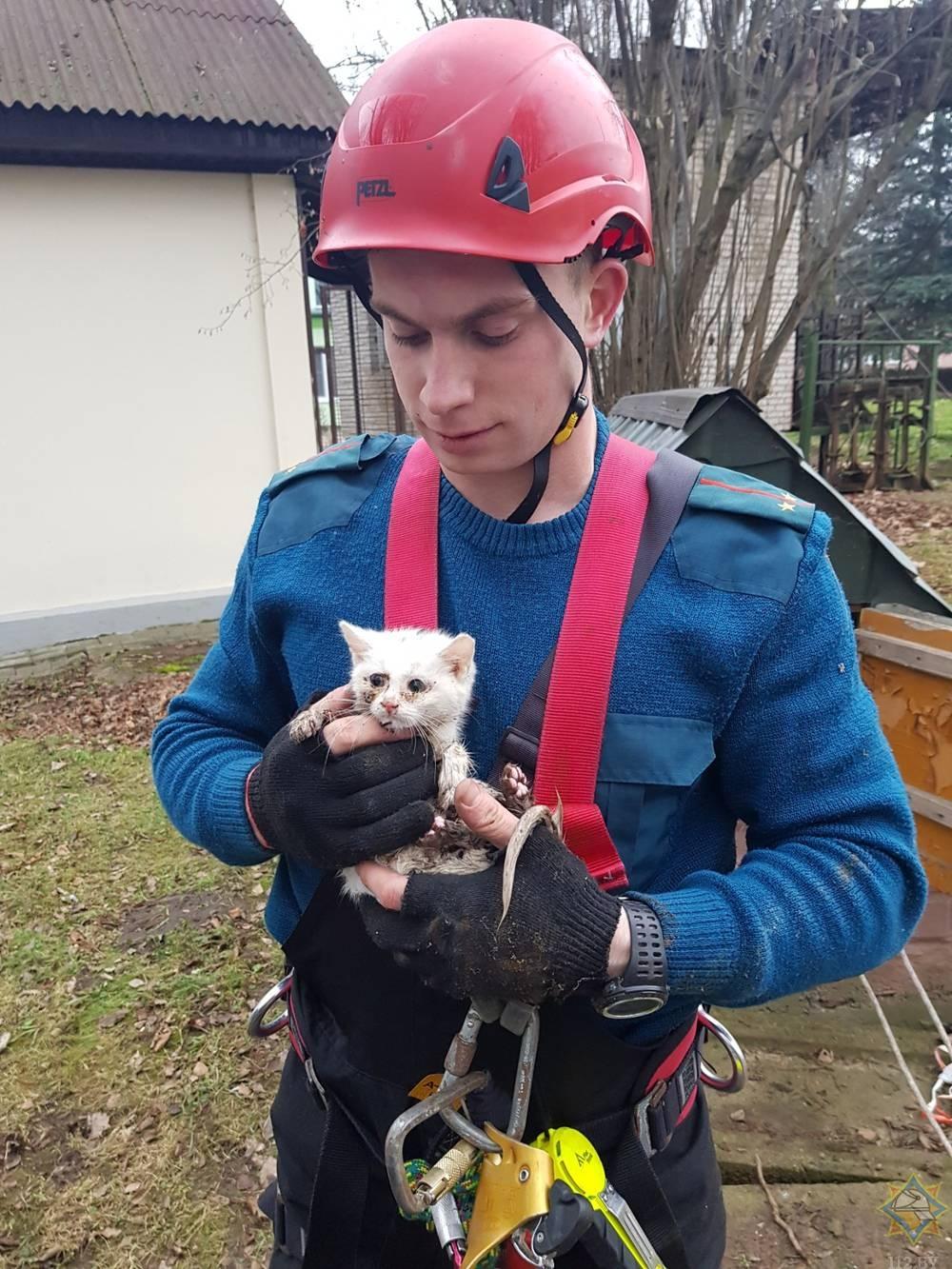 В Лиде спасатели оказали помощь котенку.